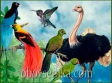 Удивительный мир птиц