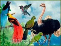 Дивовижний світ птахів