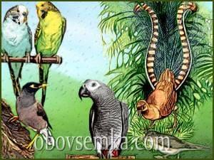 птицы которые говорят