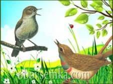 Навіщо співають птахи
