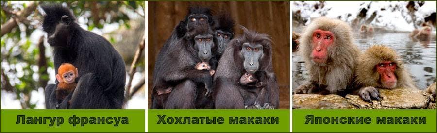 martyshki-02