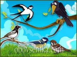 Птицы живущие рядом с нами