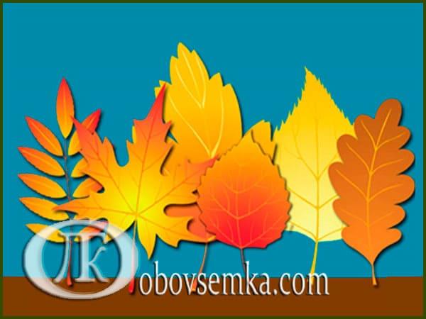 аппликация из осенних листьев осенний парк
