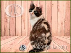 Таємне слово про кішку