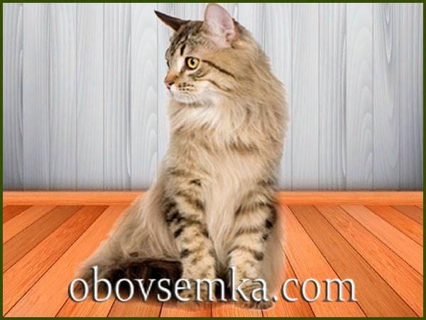 Кошка с характером