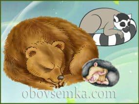 Компанія сонь серед тварин