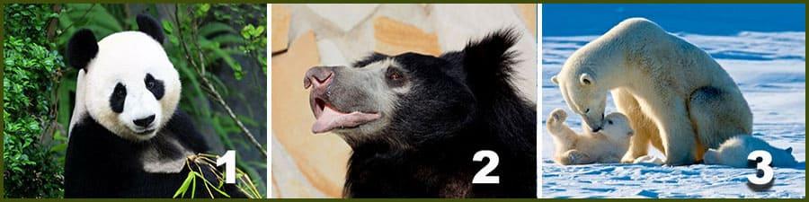 панда, губач, белый медведь