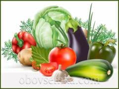 Як давно люди вирощують овочі
