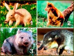 Десять необычных обитателей нашей планеты
