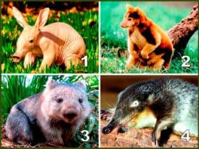 Десять незвичайних мешканців нашої планети